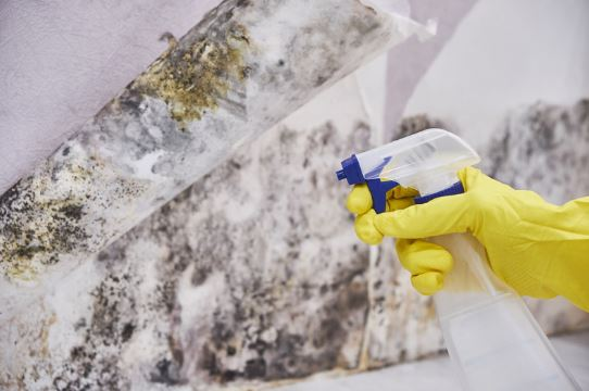 Buying Home As Is Concept with Gloved Hands Cleaning Mold